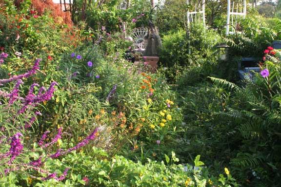 my garden path a florida and national backyard wildlife